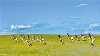世界最大高原珍稀动物园之一